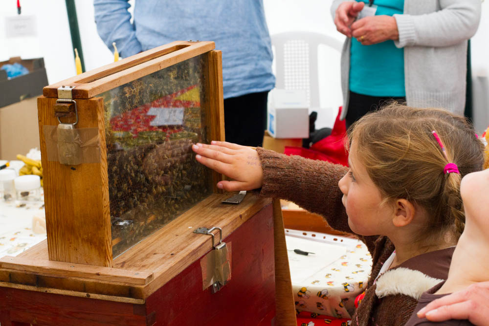 CHILDREN looking at live bee exhibit touching glassat Usk agricultural show showing obvious excitement Gwent Wales UK