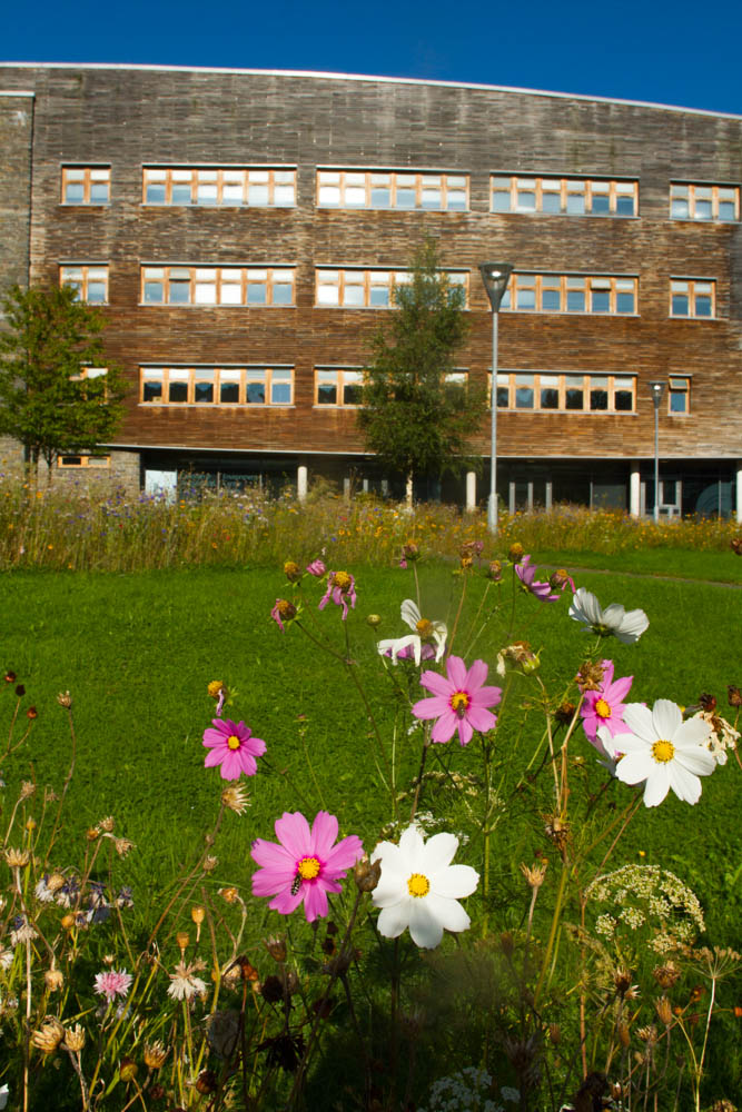 Selection of flowers grown from seed to encourage bees and therefore nature conservation outside Wales Environment Centre ( where you can obtain seeds free TO BENEFIT BEE CONSERVATION ELSEWHERE IN wALES ) , Bangor University ,Bangor Gwynedd N Wales UK