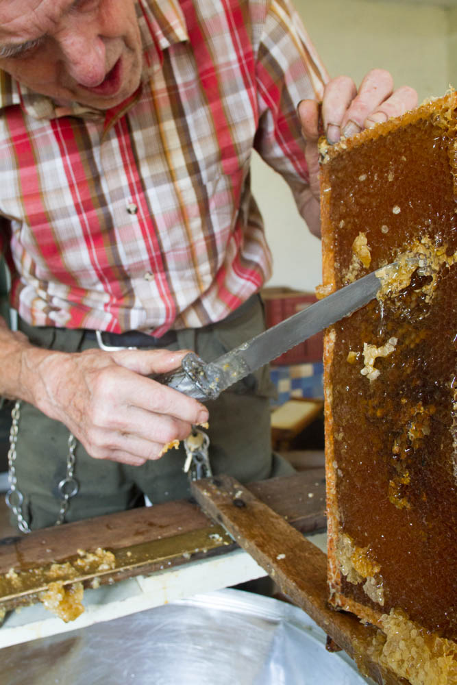 professional Beekeeper-Nick Hunt removing wax from combs  prior toextracting honey by machine Usk Gwent UK