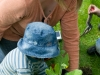 Henllan Village Bee Friendly project (first such project in UK): community group planting Cowslips(Primula Veris) to attract wild and honey bees, organised by North Wales Wildlife Trust and Cadwyn Clwyd , Community nature conservation .