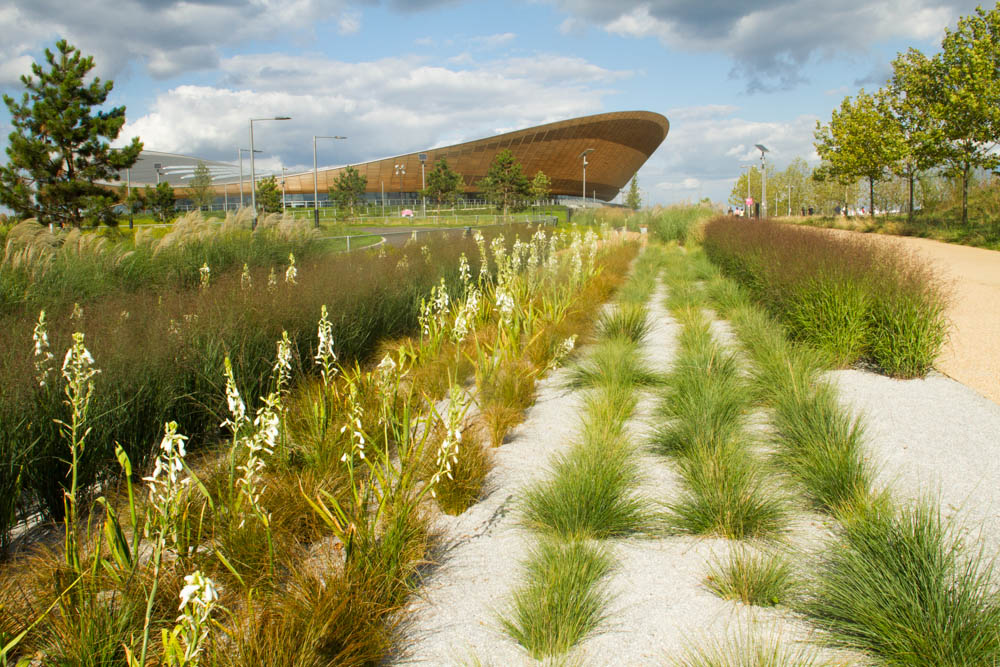 Beautiful southern hemishere plants , planted to attract native bee species on Queen Elizabeth Olympic Park , velodrome back ground Stratford London UK